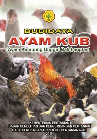BUDIDAYA AYAM KUB (Ayam Kampung Unggul Balitbangtan)